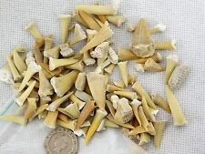 Bag Of Shark Teeth + Sting Ray Plates Fossil Dinosaur Great Gift Kids Jurassic