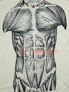 MUSCLES-Muscular System 2-sided Science Biology Anatomy Kids T shirt Youth S-L