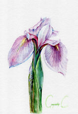 Iris, purple, pink, green, Watercolor Original Painting from the Artist