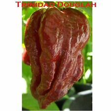 10 seeds Chocolate/Brown Trinidad 7 pot/pod DOUGLAH EXTREME Hottest pepper! RARE