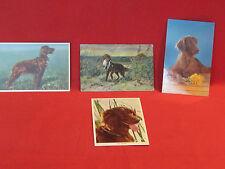 4 Vintage Irish Sestter dog postcards