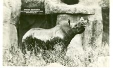 Brookfield,Illinois-Afric an Rhinoceros-Rppc-Zoo-(Ill- B*)
