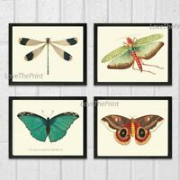 Unframed Butterfly Dragonfly Locust Print Set of 4 Antique Home Room Wall Art