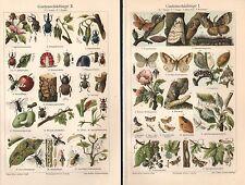 Gartenschädlinge I - III Insekten Käfer Traubenwickler Nascher Lithographie 1906