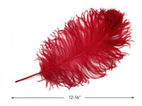 10 Pieces Red Ostrich Tail Large Feathers Centerpiece Halloween Costume 12-16""