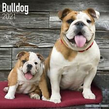 Bulldog Calendar 2021 Premium Dog Breed Calendars