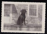 Vintage Antique Photograph Adorable Little Puppy Dog Sitting on Porch