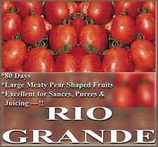 Heirloom Tomato RIO GRANDE❋200 Seeds❋Cold Hot Humid Climates Disease Resistant
