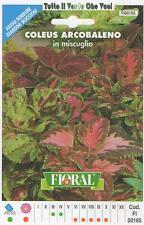 COLEUS ARCOBALENO MISCUGLIO - AIUOLE BORDURE ROCCIOSI-FLORAL - BUSTA SEMENTI