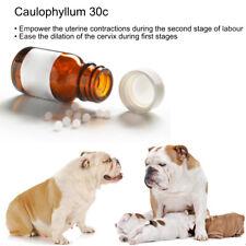 Caulophyllum 30c Prepare cervix for labour empower Contractions Dog Whelping Aid