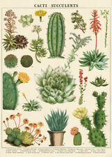 Cavallini & Co. Cacti & Succulents Decorative Paper Sheet / Poster / Wrap