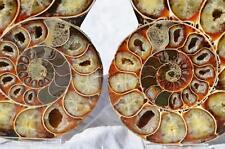 "8119 Cut Split PAIR Anapuzosia Ammonite Crystal 110myo Fossil 115mm XLARGE 4.5"""