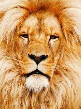 NATURE PHOTO LION BIG CAT MANE COOL KING POSTER ART PRINT BB174A