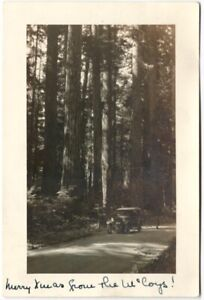1920s Photographic Christmas Holiday Photo from California Redwood Tree Grove
