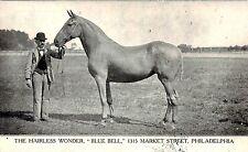 BLUE BELL THE HAIRLESS WONDER HORSE PHILADELPHIA PA