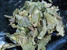 Oak leaves english herb Wicca/Pagan/Spell Supplies/Herbs/Incense witchcraft