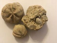 3 FOSSILE-FOSSIL- OURSIN - SEEIGEL-ERIZO SARDINIA