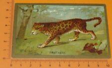 CHROMO BON-POINT IMAGE ECOLE 1900-1914 ANIMAUX PANTHERE