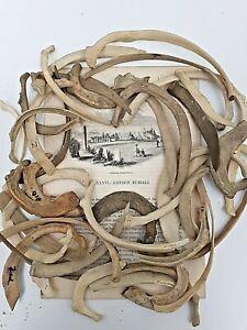 Spare Rib small: 8 - 18 cms : One careful owner : anatomy osteology skeleton