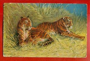 TIGERS VINTAGE POSTCARD USED 3161