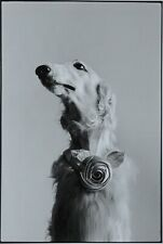 Elliott Erwitt Photo Kunstdruck Art Print 38x53cm New York City USA 1973 Dog B&W