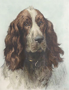 Dogs/Shooting Interest Coloured Etching Springer Spaniel