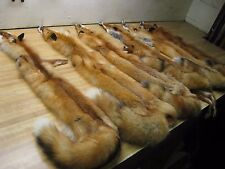Tanned Red Fox Hides ( 6 )  Fur Coats Trapping Furs Hats Bags Good Quality Fresh