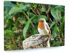 STUNNING RED ROBIN BIRD WILDLIFE CANVAS PICTURE PRINT CHUNKY FRAME LARGE #A169
