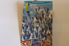 25 Blumenzwiebeln,Frühlingsstern,Brodiaea,Hyacinthus California#BZ29