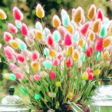 100 Pcs Seeds Rabbit Tails Grass Bonsai Fescue Ornamental Grasses Garden Plants