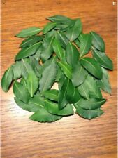 Organic Bay Leaves, 60 Fresh picked leaves, Laurus Nobilis Laurel,free Shipping
