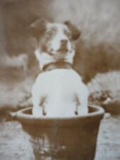 De Reszke Cigarette Card A Big Pot - Dog  PHOTO Millhoff London