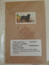 1939 British Gallagher Cigarette Trade Card Newfoundland Dog ready to frame