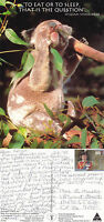 1992 KOALA BEAR WITH SHAKESPEARE QUOTE COLOUR POSTCARD