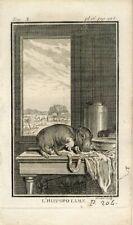 1769 HIPPOPOTAMUS Antique Copper Plate Engraving Print BUFFON