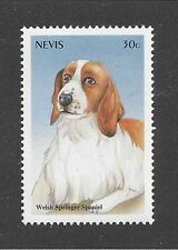 Dog Art Head Portrait Postage Stamp Welsh Springer Spaniel St Kitts & Nevis Mnh