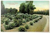 California Postcard CA Rose Garden In Wintertime 1900's 1908 Dirt Road View