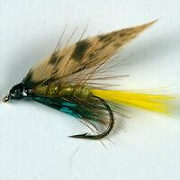 6 INVICTA CADDIS Wet Trout Fly Fishing Flies  size options by Dragonflies