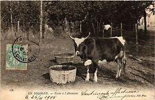CPA  En Sologne - Vache á l'Abreuvoir  (480707)