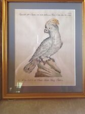 Giuseppe Vanni, Engraving of a Cockatoo on Laid Paper, 1767--1777.