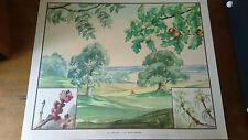 Vintage Eileen A Soper School Print/Poster - Enid Blyton Nature Series 'Spell'