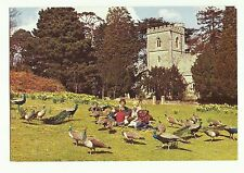 Brownsea Island Peacocks, Church Dorset postcard