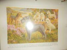 E Miner West Highland White Lakeland Terrier Schnauzer bookplate 1936 Nat Geo