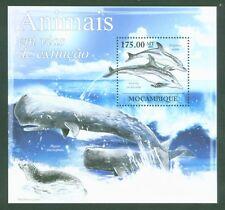 Mosambik Mozambique 2011 - Delfine Wale Delphine Kegelrobbe Pottwal Dolphins **