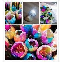 Popular 5Pcs Beauty Rare Rainbow Tulip Flower Bulbs Seeds Perennial Spring Bloom
