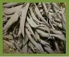 Weißer Salbei, lose (Salvia Apiana), 100 Gramm