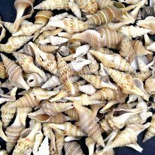 40pcs Natural Beautiful top rare real sea Shell Conch YBK4