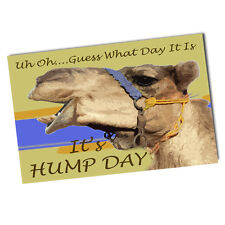 Two Camel Asking Uh Oh Guess What Day It Is, It's Hump Day 11x17 Posters