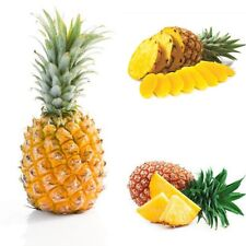 20 Seeds Organic, Non Gmo, Pineapple Seeds Tropical Land, Can Grow Indoors !!