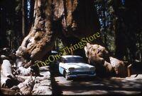 Wawona Tree Chevy Bel Air Car Chevrolet 1950s 35mm Slide Red Border Kodachrome